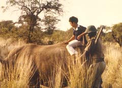Riding a hippo in Kenya, 1980